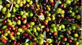 Оливки и маслины - чем отличаются?
