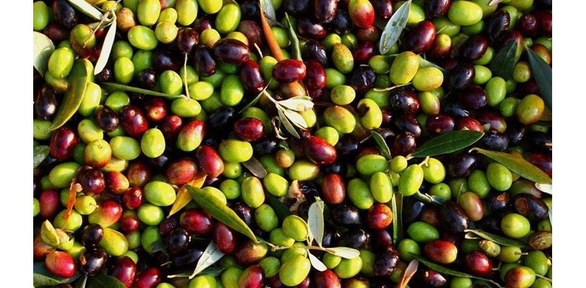 Оливки и маслины. Чем отличаются оливки от маслин: разница, польза.