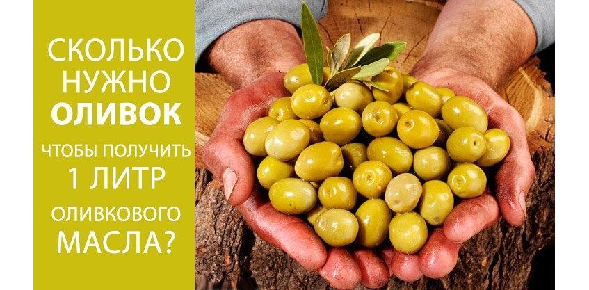 Сколько нужно оливок, чтобы получить 1 литр оливкового масла?