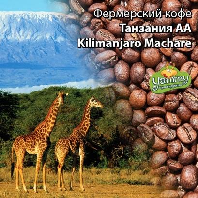Фермерский кофе Танзания AA Kilimanjaro Machare