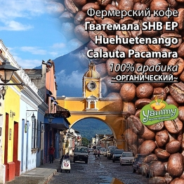 Фермерська кава Гватемала SHB EP Huehuetenango Calauta Pacamara