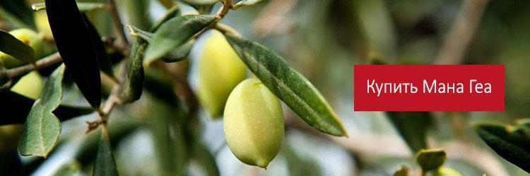 Продажа оливкового масла Мана Геа