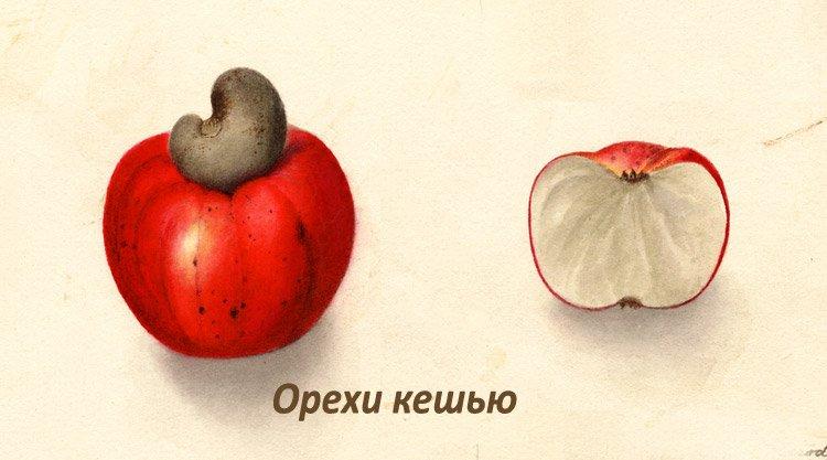Як виглядає яблуко кешью