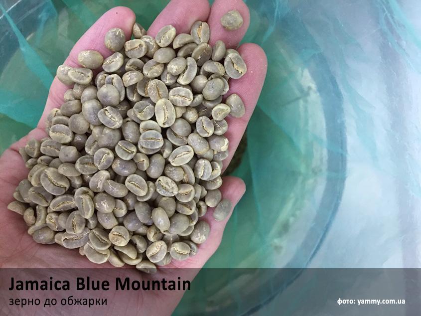 Зелене зерно кави Ямайка Блю Маунтін