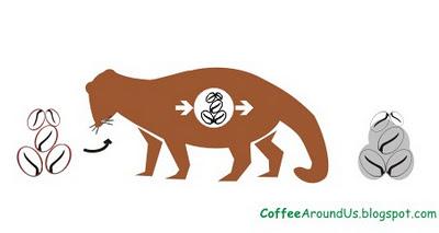 Процесс производства кофе Kopi Luwak