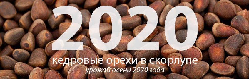 Кедровые орехи неочищенные 2020 года