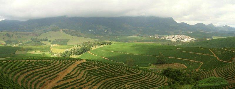 Бразильский кофе, плантация
