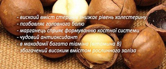 Макадамський горіх користь